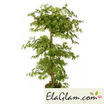 maple-multistep-pianta-artificiale-h9306